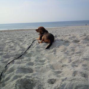 Geszengus - jetzt Yogi, auf Urlaub