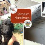 1tierheim-genehmigung